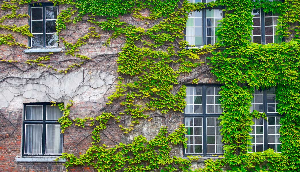 Protecting maintaining your home energy museenergy for The ivy house